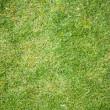 Grass textury pozadí — Stock fotografie