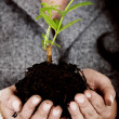 Business growth - little tree - Stock Photo
