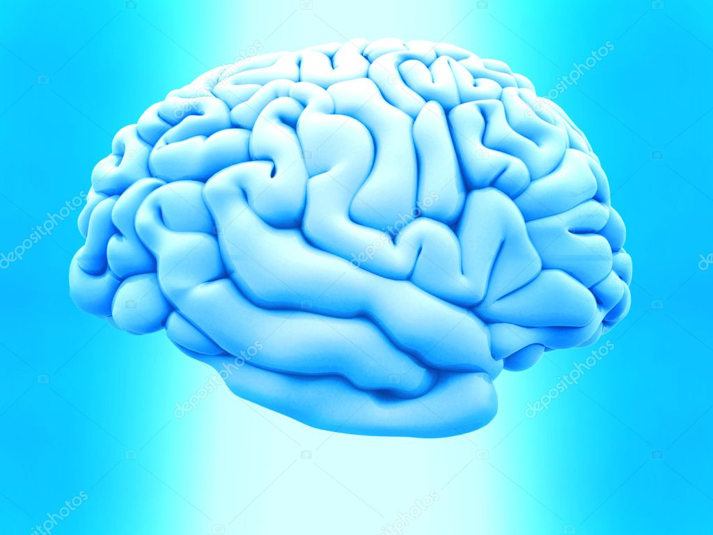 3D human brain from the side over a blue background  Foto de Stock   #7771809