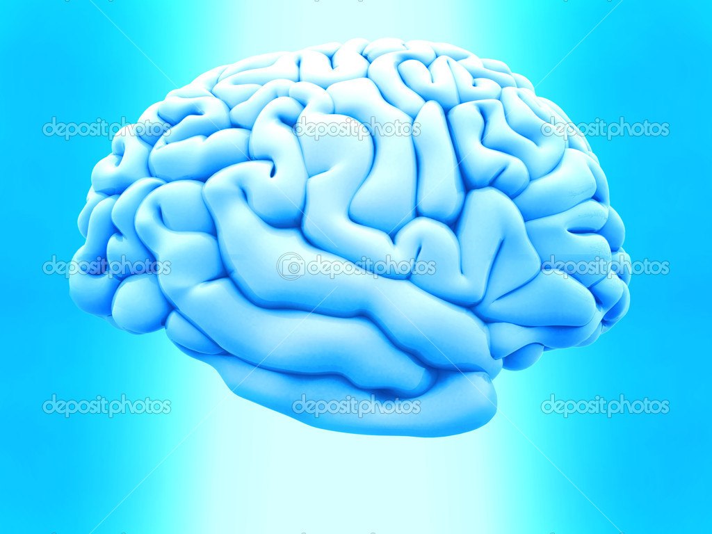 3D human brain from the side over a blue background — Foto de Stock   #7771809