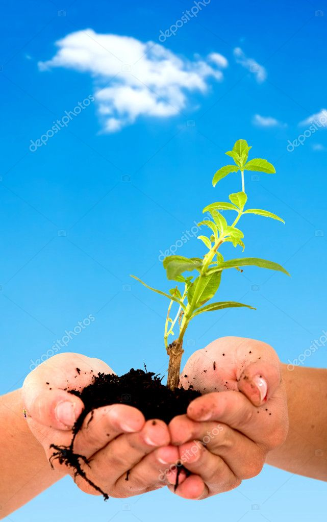 Hands holding a newly born plant with a sky in the background — Stock Photo #7773190