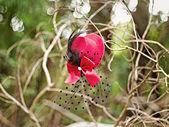 červená tophat visí na větvi, venkovní — Stock fotografie