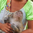 Girl holding baby monkey — Stock Photo