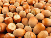 Wood Nuts — Stock Photo