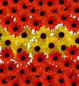 Red and yellow flowers — Stock Photo