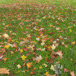 图库照片: Autumn leaves on grass