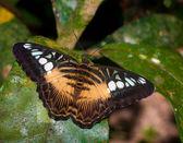Bir izne kelebek — Stok fotoğraf