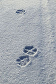 The dog's footprints in the snow — Stock Photo