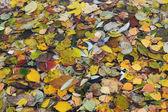多くの明るい色の様々 な木の葉します。バック グラウンド. — ストック写真