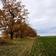 Autumn landscape with field road — Stock Photo