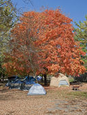 Tents at Campground in the Autumn — Stock Photo