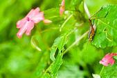 Cricket on the bush — Stock Photo