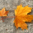 Autumn leaves on asphalt — Stock Photo