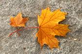 Autumn leaves on asphalt — Stock Photo