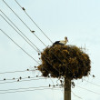 Stork nest — Stock Photo #7593285