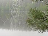 Moist spiderwebs — Stock Photo