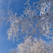 Stock Photo: Wintry background. twigs in hoar-frost.