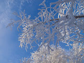 Wintry background. The twigs in hoar-frost. — Stock Photo
