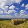 The hay rolls in the field. — Stock Photo