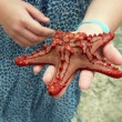 Red starfish — Stock Photo #7605405