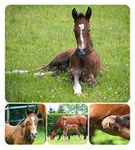 Collage of newborn foal — Stock Photo