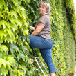 Woman maintain the green wall - Stock Photo