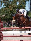Paardensport jumper — Stockfoto