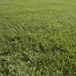 Grass patern — Stock Photo
