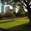 Stock Photo: Royal Botanic Gardens
