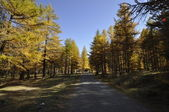 Autunno in montagna — Stock Photo