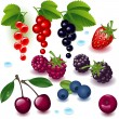 Set berries - Stock Vector