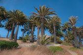 Palm Tree Hill — Stock Photo