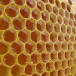 Пчелиный сот с мёдом. Beer honeycombs with honey — Stock Photo