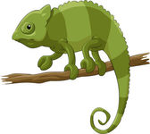 Chameleon — Stock Vector
