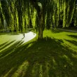Weeping willow — Stock Photo #7602561