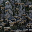 Sheep mountain — Stock Photo