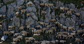 Sheep mountain — Stock Photo