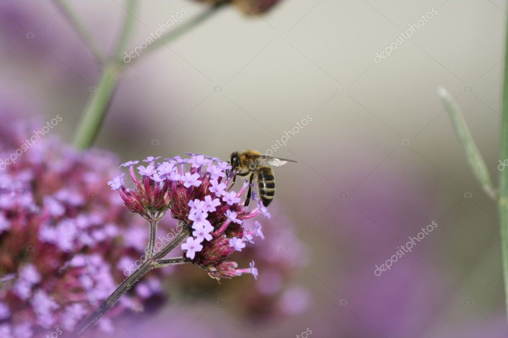 Bienen — Stock Photo #7682233