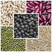 Beans collage — Stock Photo
