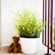 Flower pot on the balcony - Stock Photo