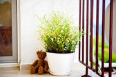 Flower pot on the balcony — Stock Photo