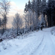 Alone path in winter forest — Stock Photo #7743179