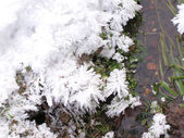 Snowflakes at the stream — Fotografia Stock