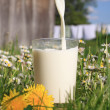 Stock Photo: Glass of milk