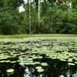 Lilly Pad Pond — Stock Photo