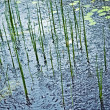 Rain on Pond — Stock Photo