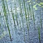 Rain on Pond — Stock Photo