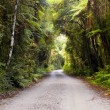 Jungle Road — Stock Photo