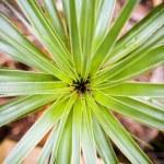 Plant Details — Stock Photo