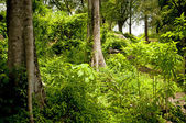 Jungle Landscape — Stock Photo